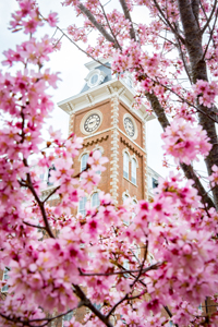 old main in blossom photo
